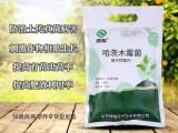 绿陇生物 哈茨木霉菌 防治土传病害提秧壮苗