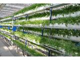 潍坊优质的立体栽培提供商,寿光水培公司