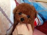珠海哪里买狗的人比较多 珠海应该去哪里买狗好