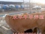 【瑞丽】2015小尾寒羊↘波尔山羊最新报价