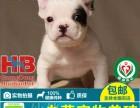 深圳哪里有卖法国斗牛犬,深圳买狗去哪里好