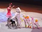 大型专业马戏团演出移动马戏团表演