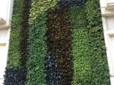 成都植物墙工程 绿植墙工程 垂直绿化 立体花艺 主题花艺
