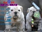 宠物店和狗市里的法国斗牛犬可以买吗 健康的多少钱一只