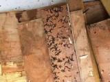 安州区除白蚁公司