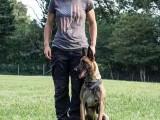 黄石柴犬包纯种保健康签协议出售 全国可飞可上门