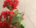 四季春虫艺虫具店