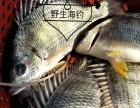 生态健康食材野生海鲜,好吃停不下来