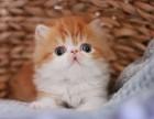 出售3个月波斯猫,本猫舍另有其他猫咪出售