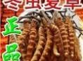 武汉市回收冬虫夏草 价格107元至219元数量玖仟克