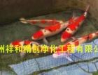 苏州锦鲤渔场批发锦鲤及建造景观鱼池过虑池 销售过滤器材鱼药等