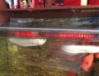 银龙鱼,鹦鹉鱼