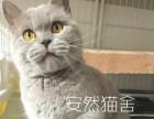 安然猫生活馆开业大优惠