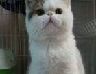 我家有各种各样宠物猫,定海城区上门挑选