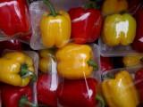 郑州无公害蔬菜 蔬菜箱
