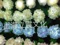 浪漫玫瑰花制作出租 美陈展览道具制作出租出售