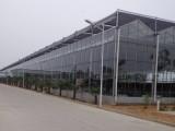 玻璃溫室設計 金坤玻璃溫室大棚建造