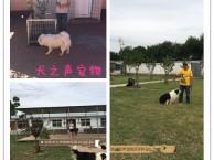 燕莎家庭宠物寄养狗狗庄园式家居陪伴托管散养可接