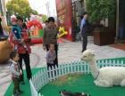 盐城酒吧租羊驼圣诞庆典暖场,上海启欣展览展示有限公