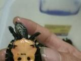 出售草龟。。。!