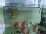 因外地上班特此出售银龙鱼,招财鱼,鹦鹉鱼
