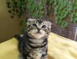 豹猫宠物猫 淘宝店铺搜:双飞猫