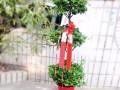 武汉写字楼办公室室内植物盆栽送货上门,可出租摆租赁