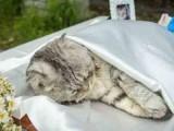 全北京猫狗宠物火化服务 现场火化骨灰立取送骨灰罐