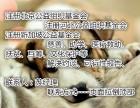 申请北京公募基金会需要提供哪些要求