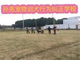 天津训犬师培训学校宠物老师训练学习训狗老师培训基地