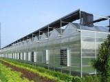 对智能温室大棚种植发展趋势的理解
