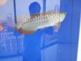 出售魚缸魚缸定做魚缸維護清洗魚缸搬家