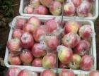 山东苹果价格山东苹果销售苹果批发