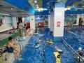 青年健身泳班提高班开始报名了