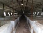鹤壁新区东10公里 厂房养猪场 6000平米