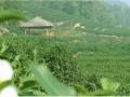 杭州游玩烧烤
