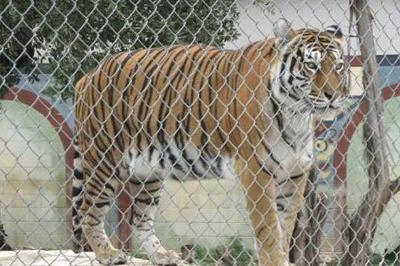 动物园围栏3.png