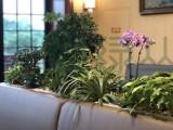 武汉办公室绿植租摆养护标准和清洁要求