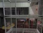 九五成新猫笼子,急卖!!!1.25米0.68米