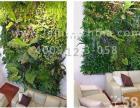 工装植物墙、室内植物墙绿化公司