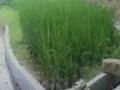 浙江省丽水市70亩旱地出租