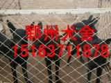 南阳郓州黑狼犬注册全国发货