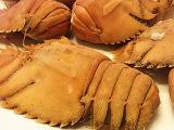 泰国进口琵琶虾 鲜活海鲜水产皮皮虾 琵琶虾 虾爬子 富贵虾