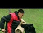 津滨国泰犬业训练,寄养,培训,