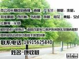 常年收购绿化苗木,香樟树,广玉兰,榉树,朴树,桂花,黄杨