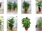 天津植物墙总设计施工植物背景墙绿植墙设计