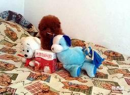 大连哪卖纯种韩国血统茶杯泰迪熊犬