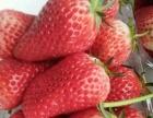 有机草莓采摘基地,一切源于自然!