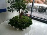 杭州綠植租擺 酒店 寫字樓花卉租賃配送