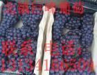 常年代办辽宁巨峰葡萄北镇各种水果代办